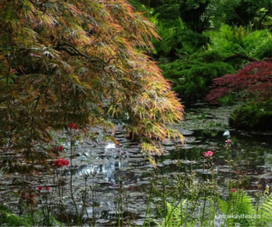 Water flowing peacefully in a japanese garden